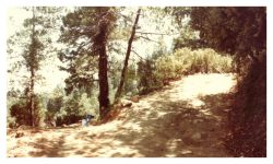 Image of a dirt road, a few trees and scrubby brush.