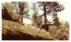 Image of steep hillside with picnic table, trees and brush