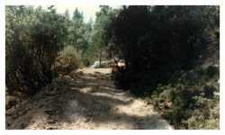 Image of a fresh-cut, rough dirt road