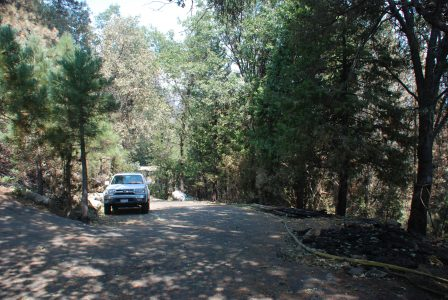 Image of a driveway through green trees