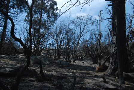 Image of blue sky through burned trees and shrubs