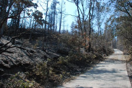 Image of a steeply rising driveway with burned trees
