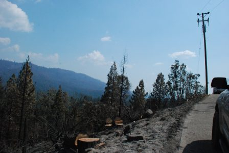 Image of wide open hillside with fresh treestumps in the foreground