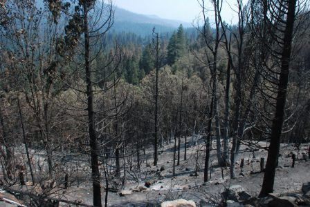 Image of blackened tree trunks in the foreground with browned leafy trees below