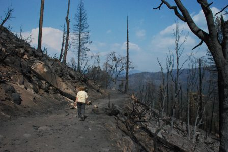 Image of road across a steep slope of burned landscape