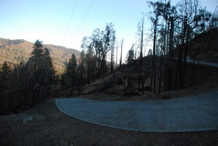 Image of driveway surrounded by many fallen trees