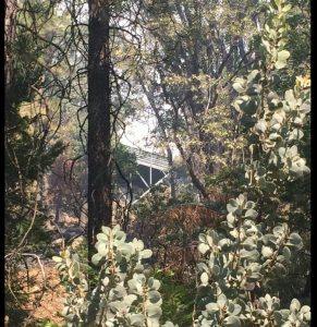 Image of a structure mostly obscured by thick vegetation.