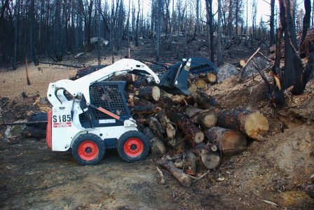 Image of the Bobcat placing 3 large logs onto the top of a pile of large logs