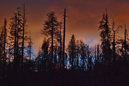 Image of bright orange clouds behind the black silhouettes of tall trees