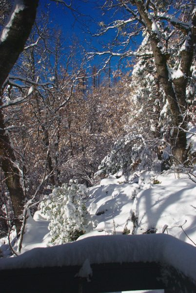 Image of brown, snowy woods with bright sunshine and deep blue sky