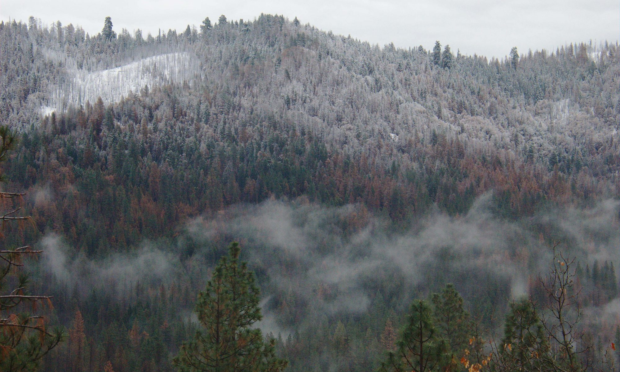 Image of clouds drifting past a forested hillside dusted with snow